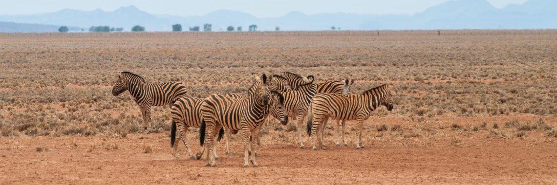 Explorer les étendues sauvages africaines avec un spécialiste de voyage en Namibie